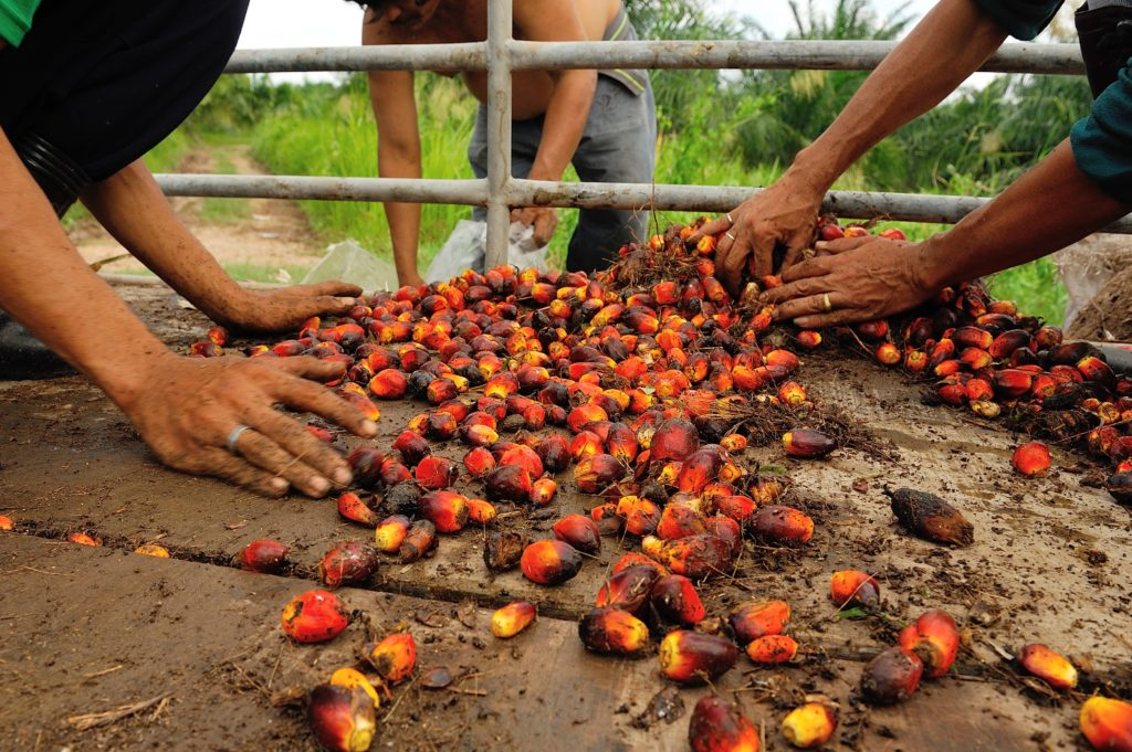 palm oil commodity atlas research page with a map